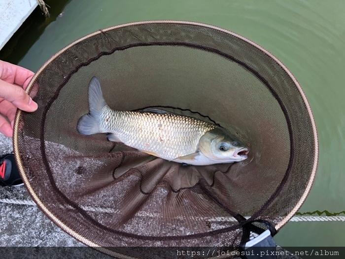 好友有釣到魚