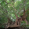下一站是樹中佛寺