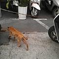 路上偶遇貓咪