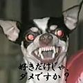 20101114_25499.jpg