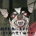 20101114_25489.jpg