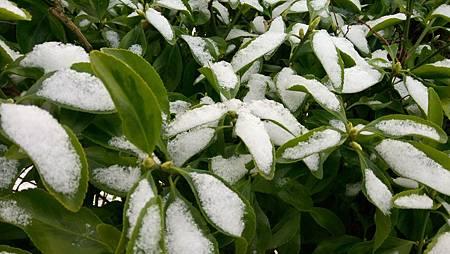 下雪蹓海琪 0204-05