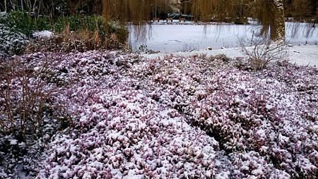 下雪蹓海琪 0204-06