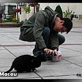 北帝廟前小黑貓