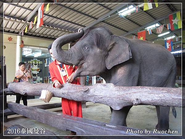 可愛的小象