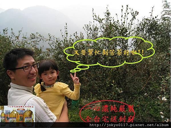 2012草嶺一心苦茶油