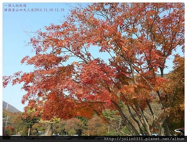 [韓國釡山]金井山梵魚寺