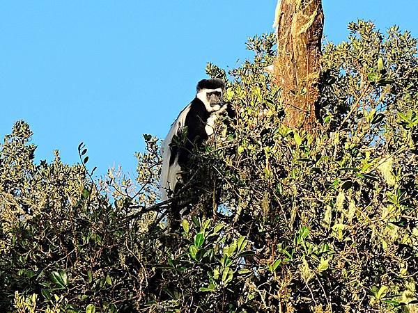 39. 猴子.JPG