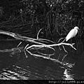 水潭上的倩影(黑白)