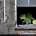 破窗裡的春天(修改前)