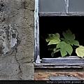 破窗裡的春天