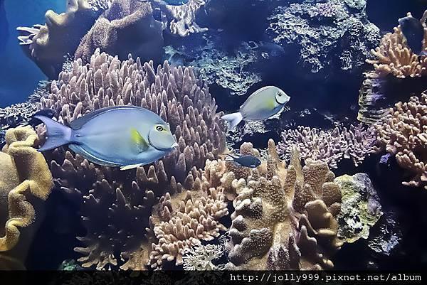 美麗的珊瑚礁
