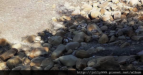 岩石上的樹影