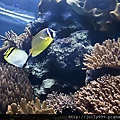 美麗的珊瑚礁2