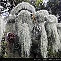 熱帶植物0G