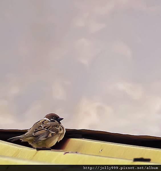 屋簷上的小麻雀