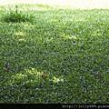 草坪上的光影