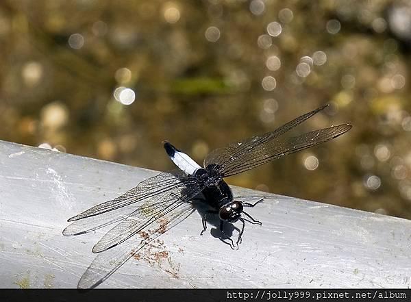 蜻蜓之美3