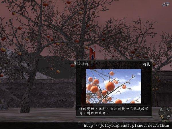 八珍柿.bmp