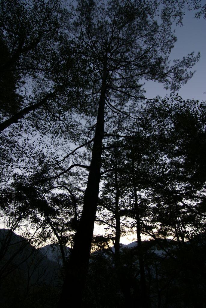 晨曦在林梢透出