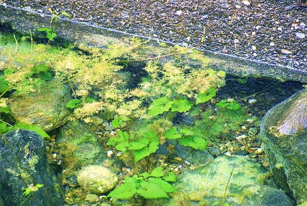 這是水溝裏的景像
