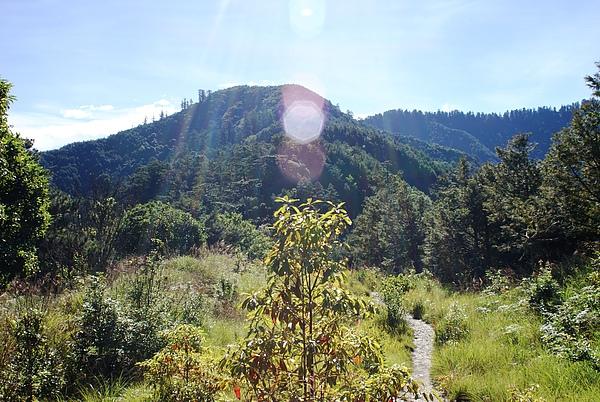 一路陡上至防火林線