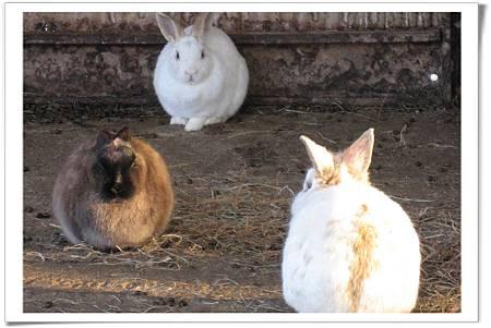 一小群兔子.jpg