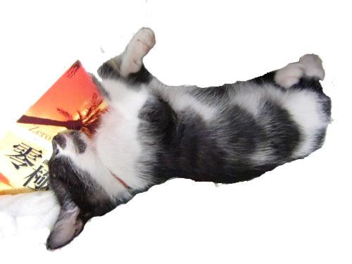 cat-10-1s-j.jpg