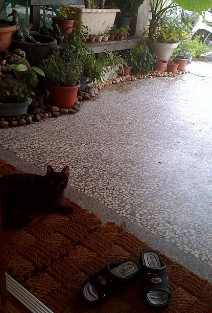 cat-1-s.jpg
