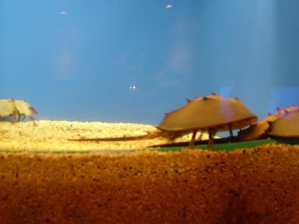 澎湖海洋館
