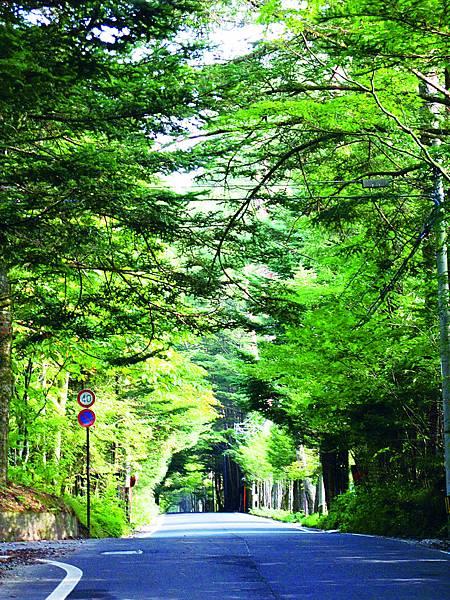 森林單車道 (3).jpg