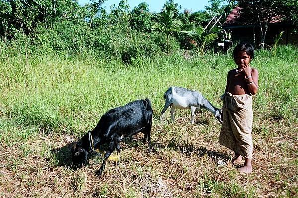 15.牧羊也是她的生活.jpg