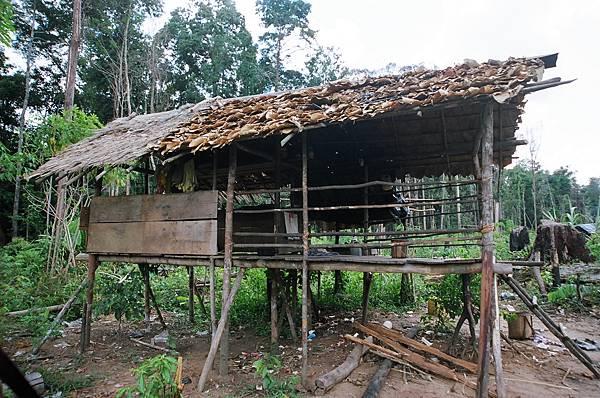 35.發現廢棄的樹屋.JPG