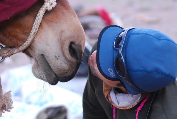 (八)2親駱駝.JPG