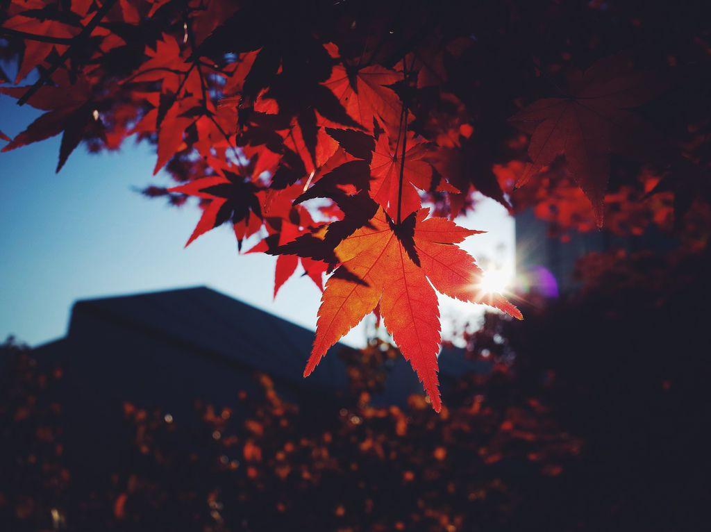 相片 2014-11-18 下午2 31 19.jpg