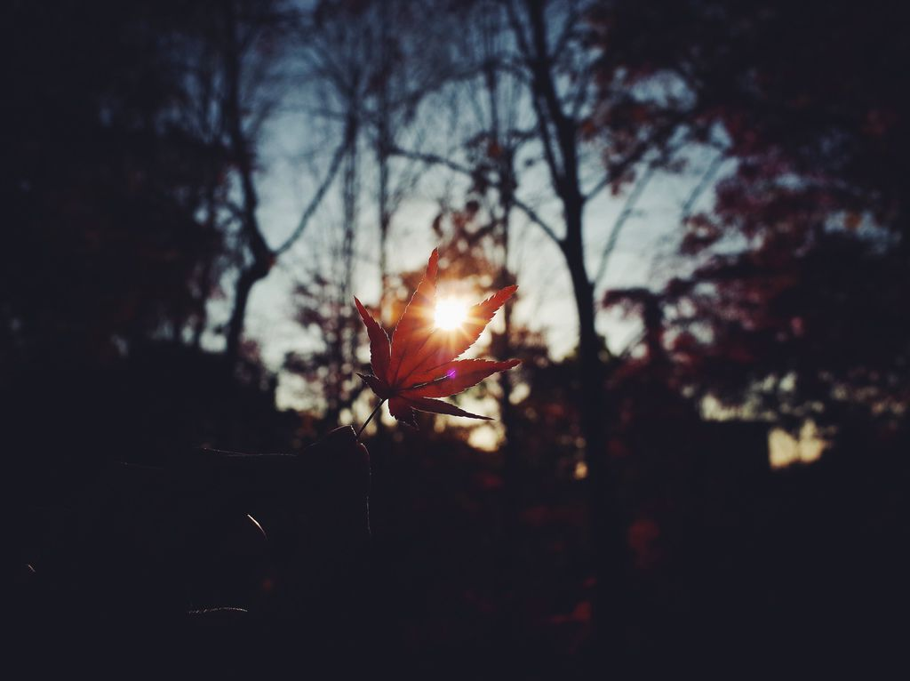 相片 2014-11-18 下午3 04 54.jpg