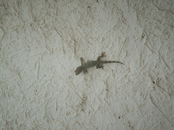 無敵可怕大蜥蜴