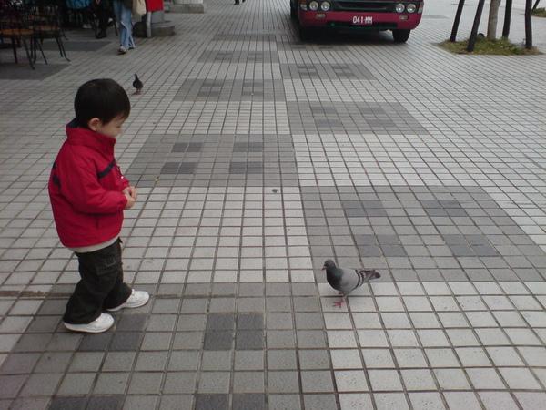 大寶餵鴿子