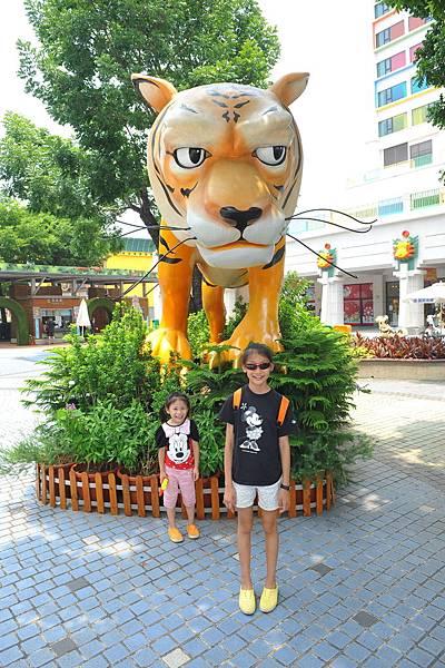 大老虎噢!