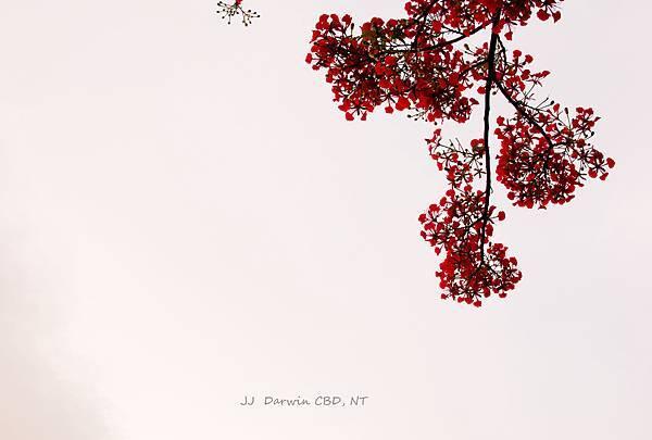 DSC_0200-2.jpg
