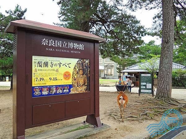 奈良散策.JPG
