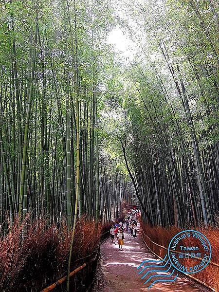 京都嵐山 (8).jpg