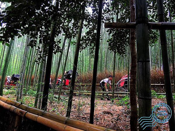 京都嵐山 (10).jpg