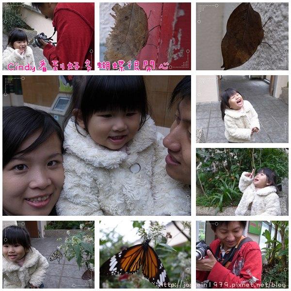 20101103-4.jpg