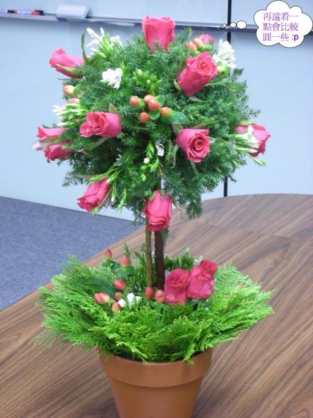 玫瑰樹.jpg
