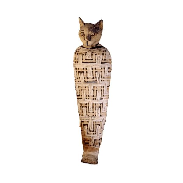 mummycat.jpg