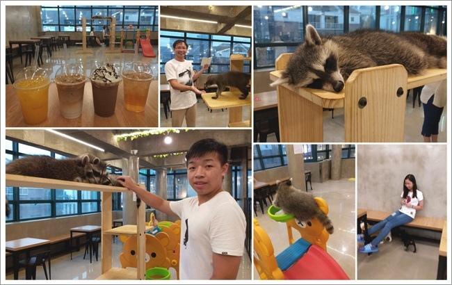 浣熊咖啡館2.jpg