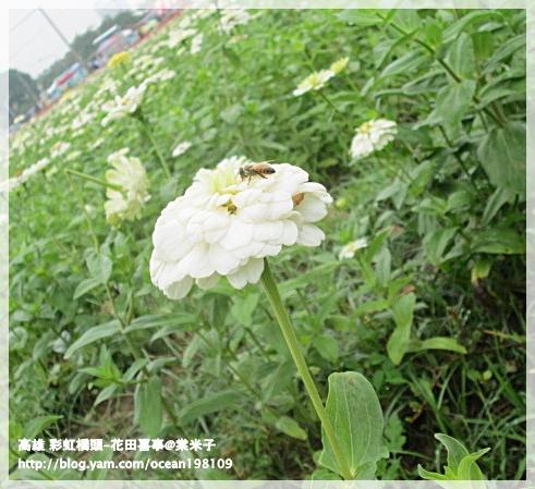 花海(白)3.JPG