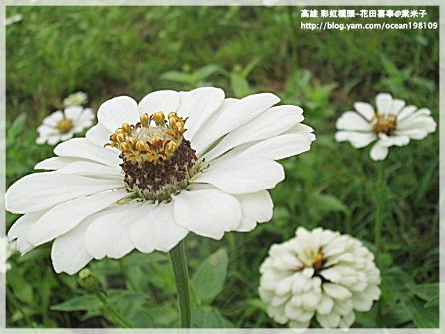花海(白)5.JPG
