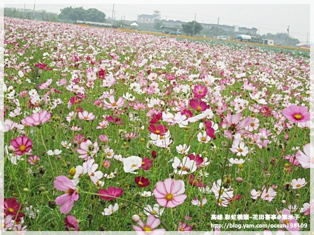 花海(紫)1.JPG